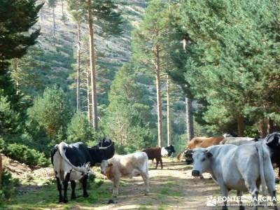 Tejera Navafria - Arroyo de los Tejos;rutas y senderismo caminatas marcas ropa montaña